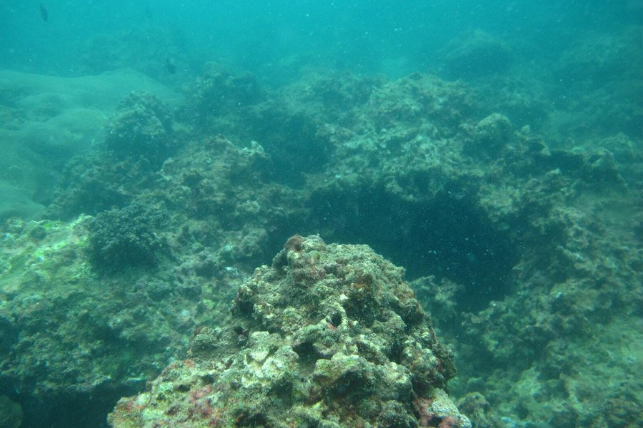 Coral Reef Restoration Project At Nakalay Beach